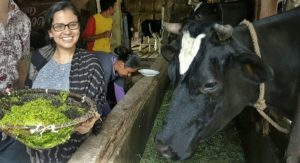 Bandung, Indonesia- Field site visit to verify the progress of project from Window 1 grantee, Consortium HIVOS, and identify lessons learned on utilization of biodigesters, bioslurry and lemna (mixture of cassava flour and grass, fed to cows for extra protein, held in picture below) in West Java.